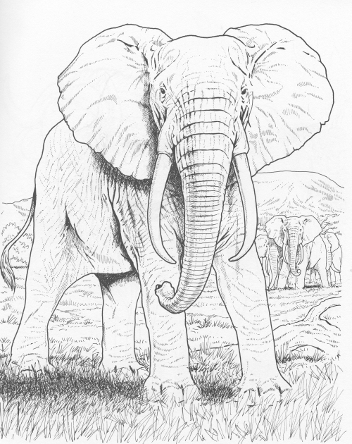 Sample Pages From [em]Wild Animals Coloring Book[/em] By John Green  Love2learn.net
