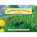 Little Black Ant on Park Street